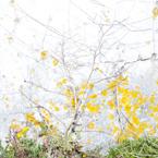 isogai_plants