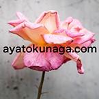 tokunaga_hp